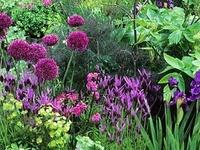 FFF Edible Gardens