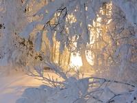 ~Winter ❄ Wonderland~