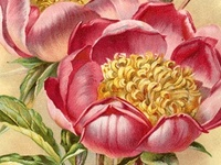 Vintage Flower Seed Packets and Catalogs