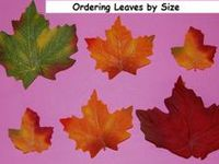 Playful Learning Activities for a Fall TREES AND LEAVES THEME in Preschool and Kindergarten