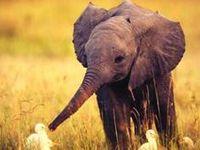 Animals Make me Smile :)