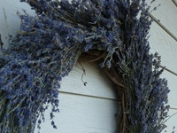 busy bee lavender