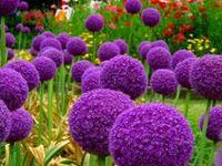 . garden dreaming .