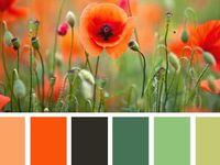 Color !