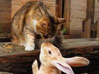 pets, cat, cats, kittens, kitty, kitties