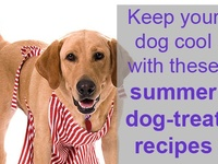 Cooking for Canines