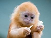 Cute Animals(: