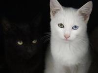 Cat's Meow - Black/White