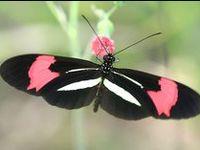 Boîte à papillons & co