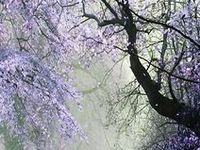 My favorite color! Indigo, violet, purple, orchid, plum, lilac, lavender…