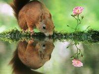 Reflections*Animals