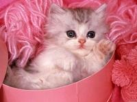 I am a Cat Girl