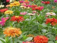 Annuals are gardener's dream plant for color. I put them everywhere and in every type of container I can find.