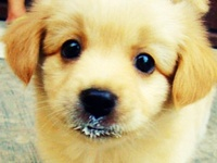 Puppies and other furriness