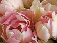 Flora / Blooms