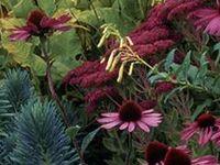 No2: PLANT COMBINATIONS