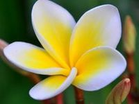 """The flowers, trees & plants of Hawaiʻi, particularly those who are unique (endemic) to the state & the endangered. Also the """"exotics"""" (invasives) commonly seen in Hawaiʻi. —❀Hale Pohaku Vacation Rentals (HPVR)❀"""