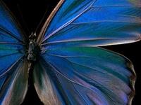 Birds, Butterflies, Bees, Moths & Dragonflies