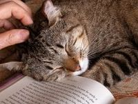 Books and Cats and Dogs