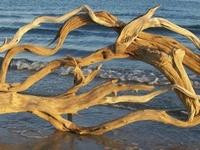 Driftwood Dreamers