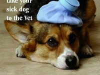 Pet Health, Hygiene & Nutrition