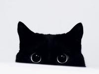 (Animals) I do love black cats! I had Lulu...now I have Sara.