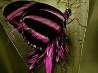 Birds, Butterflies, Moths
