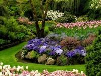 Backyards and gardening