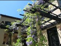 Pergolas, arbors, and trellises provide artistic and functional elements to your yard or garden.  These structures accent entrances, become garden focal features, provide shade and improve privacy, comfort and enclosure.  Fully covered structures keep you and your family out of the elements pavilions, and gazebos and covered porches can make lovely seating areas.The Pattie Group designs and artfully constructs just the right element, in just the right place so it looks as if it was always there.