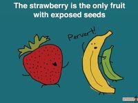Real fruit, cartoon fruit.
