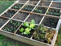 The best and easiest way to grow more food in less space
