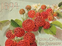 Gorgeous vintage garden ephemera, catalogues, seed packages, guides and more!  Everything ROSE on separate board: http://pinterest.com/kewlme/diy-vintage-rose-garden/