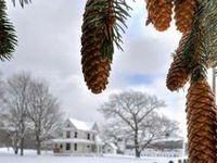 winter and snow- kış ve kar