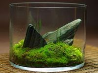 ~~A lyrical collection of terrariums, containers and  ideas to spark your own creative genius~~