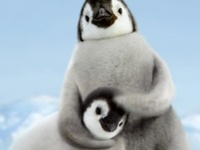 I hope I'll meet baby emperor penguin some day.