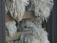 felt and wool