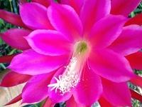 **Beautiful Flowers**