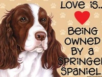Love is . . . English Springer Spaniels