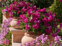 Container Gardens .·:*¨¨*:·.*♥