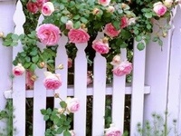 Garden Fences ✿⊱╮
