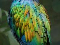 #BIRDS#