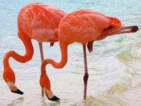 Parrots Flamingos and Swans