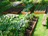 Garden tips and ideas, DIY and instructions, as well as gorgeous garden inspiration!