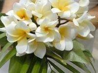 Wedding HAWAIIAN/TROPICAL