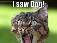Humor and other funny animals, cats, dogs and other animals, also real animal heroes. Check out my 'Funny' board as well for more humor and fun!!