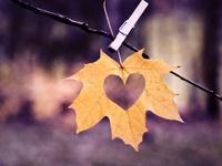 Fall Into Autumn - Crafts & Activities