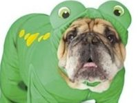 Halloween Costumes for Pups!