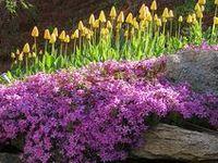 Garden~Rock Garden