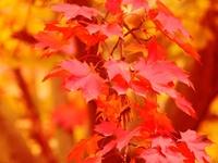 SEASONS Autumn/favourite time