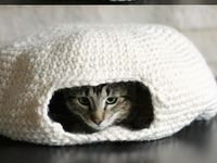 Blankets, Cushions, Carriers, Sweaters, Hats or Toys